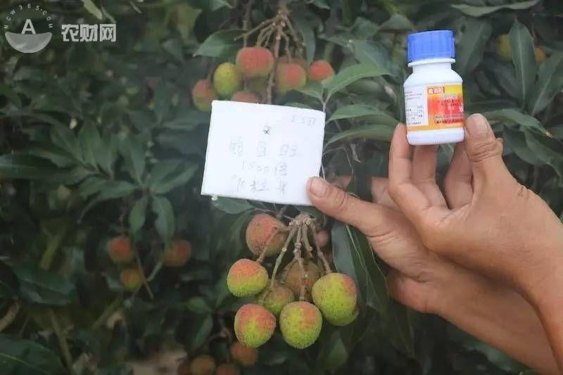 16万斤白糖罂变阴阳果损失超百万 疑似一款噻苯隆成分药剂所致