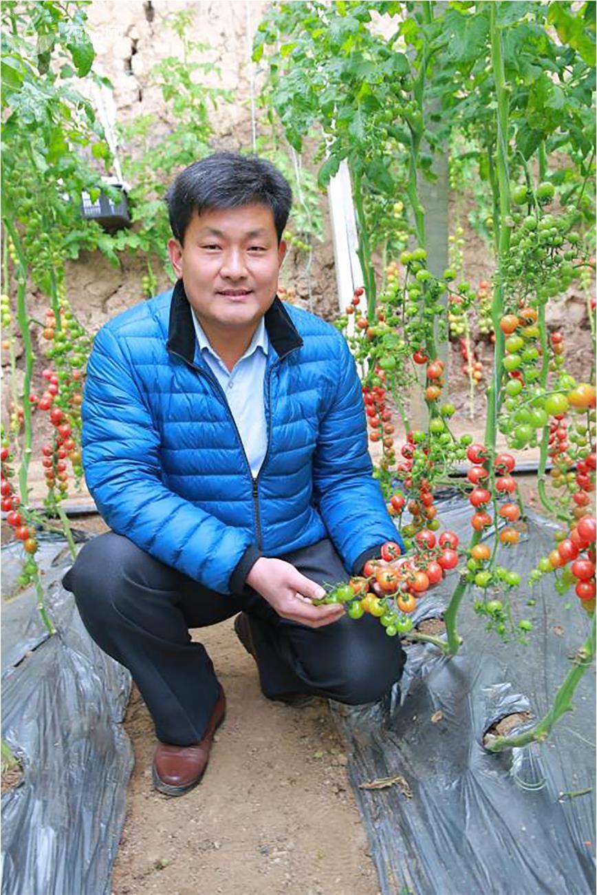 几乎没死苗!番茄产量提升30%,怎么办到的?