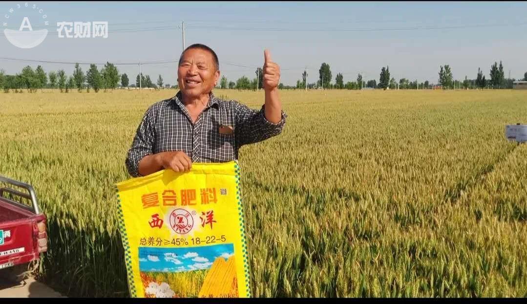 这里的农户坚持种大蒜,106万亩大蒜不容小觑