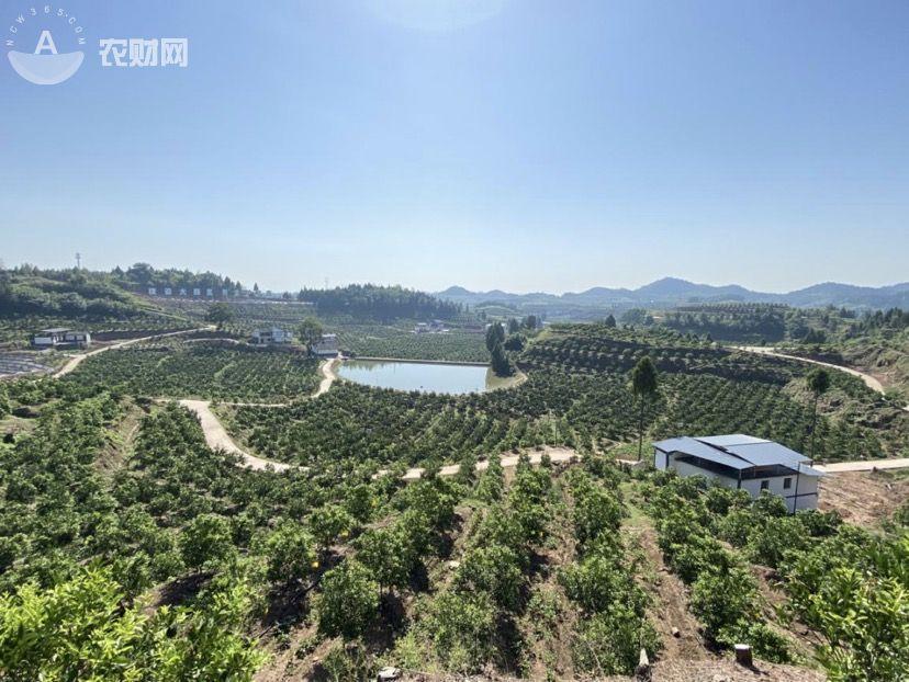 四川南部县:2020年第一期晚熟柑橘技术培训会成功召开