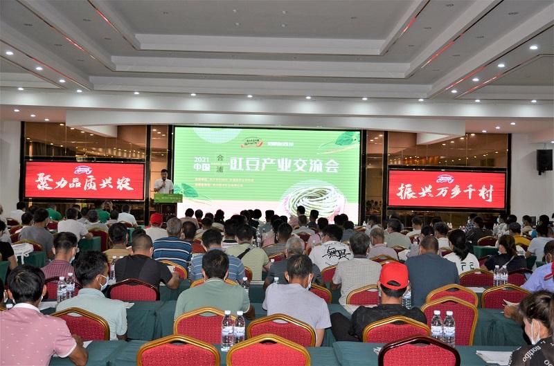 """这个""""中国豇豆之乡""""名副其实,19万亩规模占据广西四分之一!"""