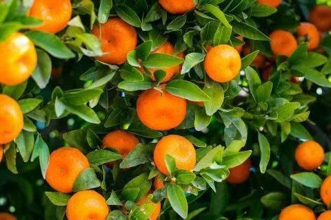 打造广西柑桔产业升级先行区!为什么是贺州?