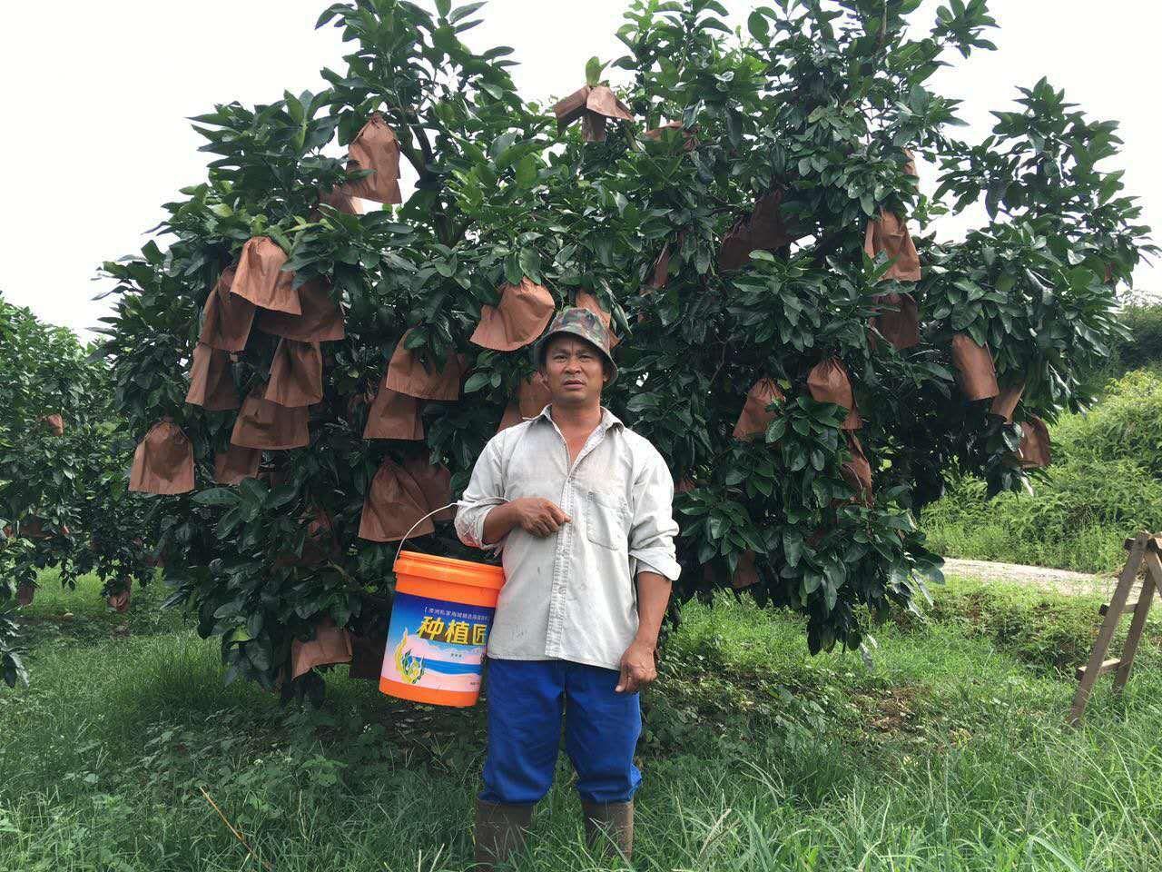 中华儿女一同来赞美 曲谱-近年来,梅州柚子种植面积大幅增加,然而,大规模发展的背后,却是