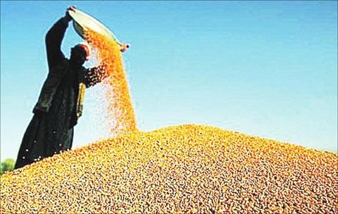 重磅!广东近13吨不合格农产品被销毁