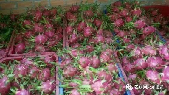 中国火龙果VS越南火龙果:口感好售价高,存储性能待提高!