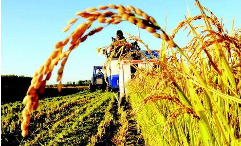 快讯!2018中央一号文件正式发布!今年农业发展重点方向都在这了!